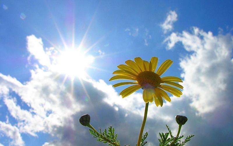 Предстоящая неделя в Таганроге будет солнечной и жаркой