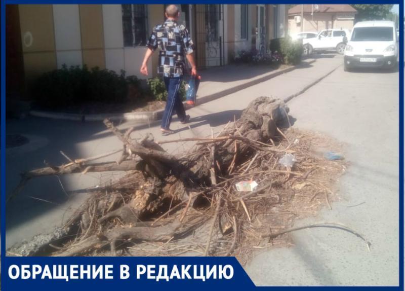 Больше недели лежит на дороге сухое дерево, но для администрации города «его там нет»
