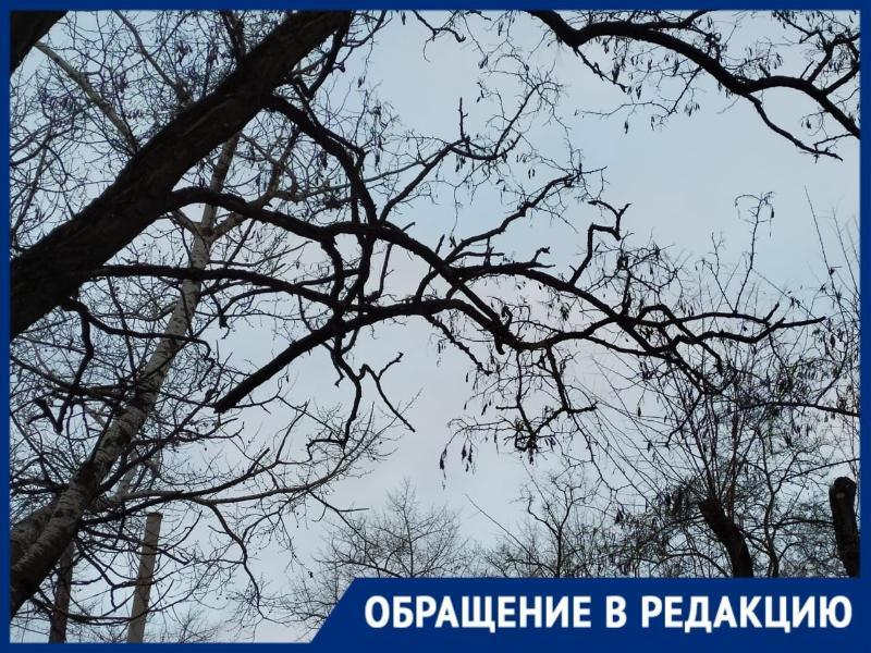 Размышления над безразличием чиновников Таганрога к проблемам жителей