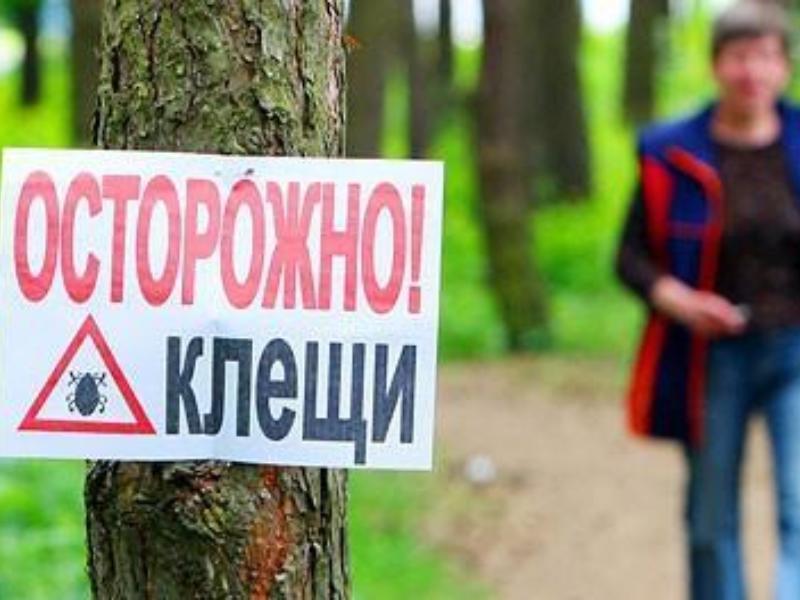 За прошедшую неделю в Таганроге увеличилось число пострадавших от укусов клещей