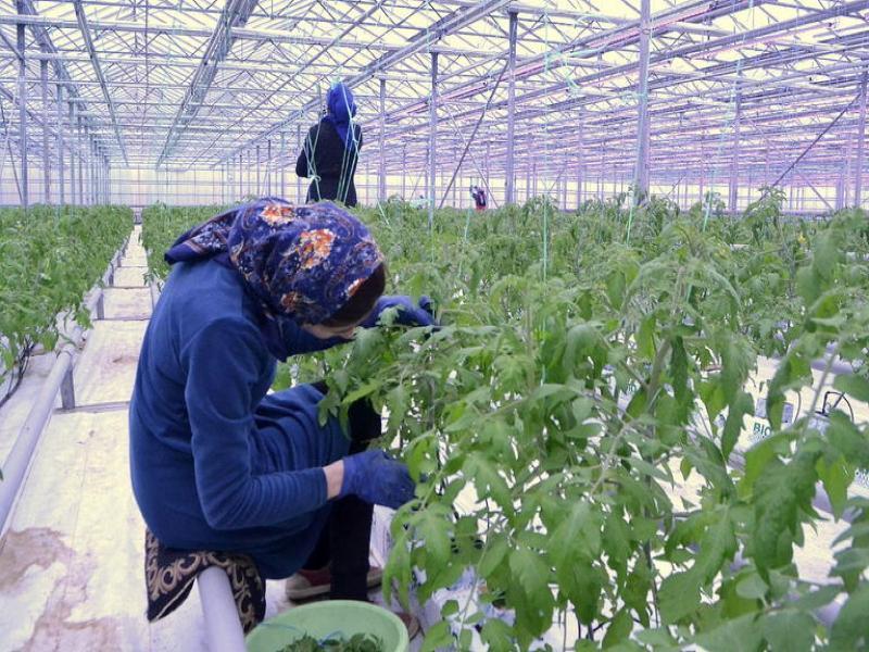 7,5 тыс рублей, бутылка водки и пачка сигарет: таганрожцев заманивают на работу