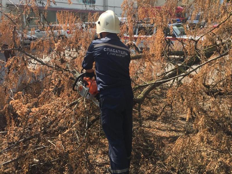 Помощь пришла откуда не ждали - спасатели Таганрога убрали сломанное дерево