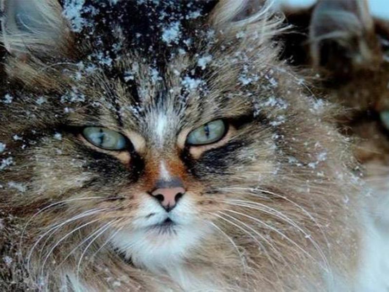 Первый снег обещают в Таганроге на этих выходных