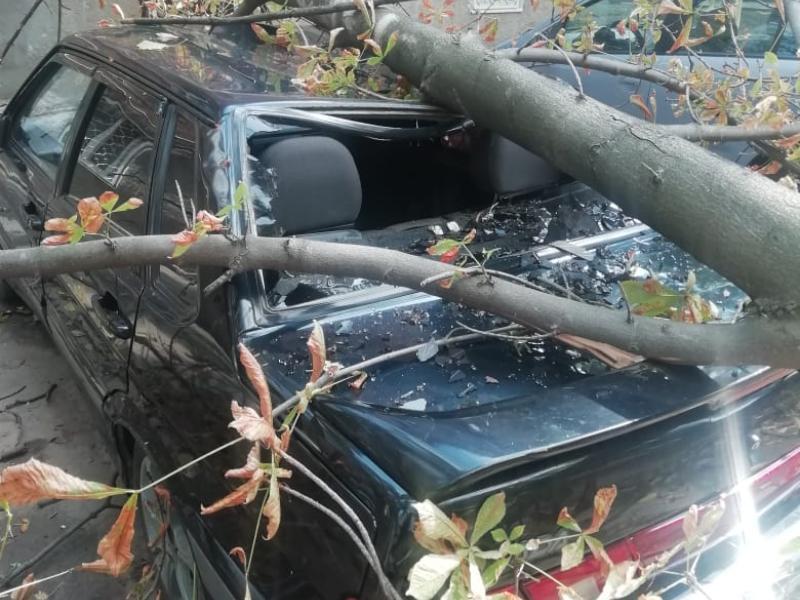 В груду металла превратило дерево автомобиль таганрожца