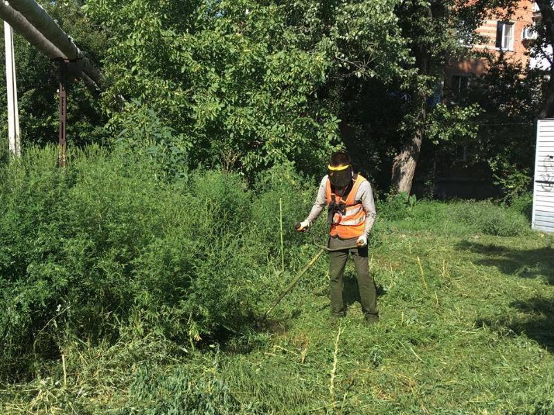 Администрация Таганрога огласила список территорий, где осенью будут косить траву