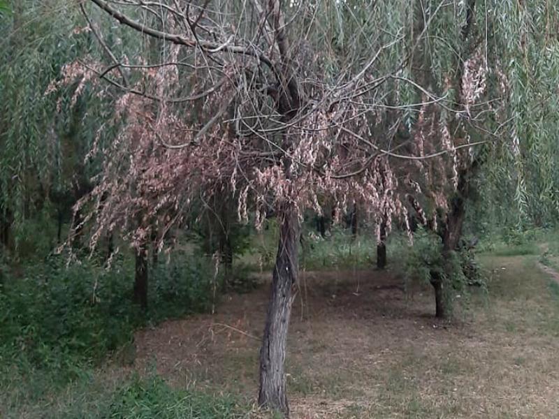 Роща «Дубки» в Таганроге находится в удручающем состоянии