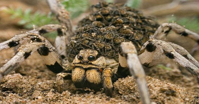 По таганрогской набережной ползают  ядовитые пауки