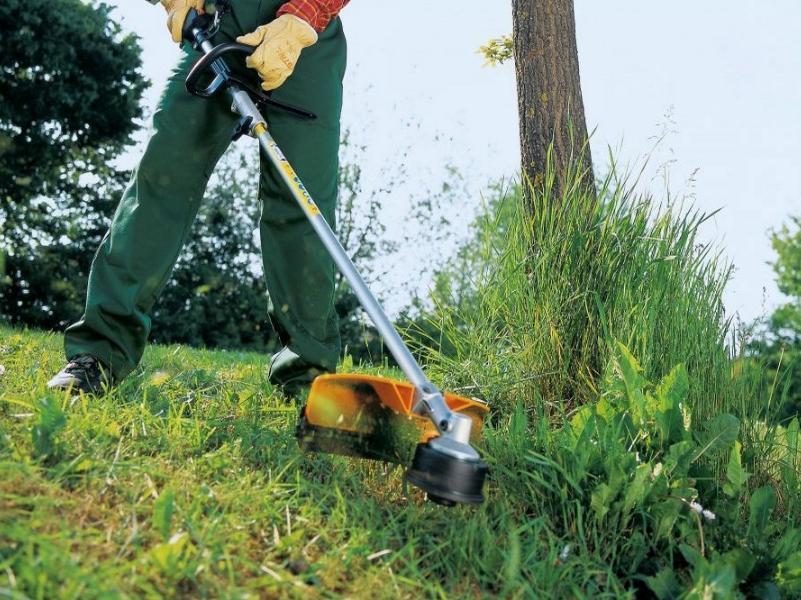 Власти Таганрога экономят на покосе травы — опять ожидать заросли амброзии?