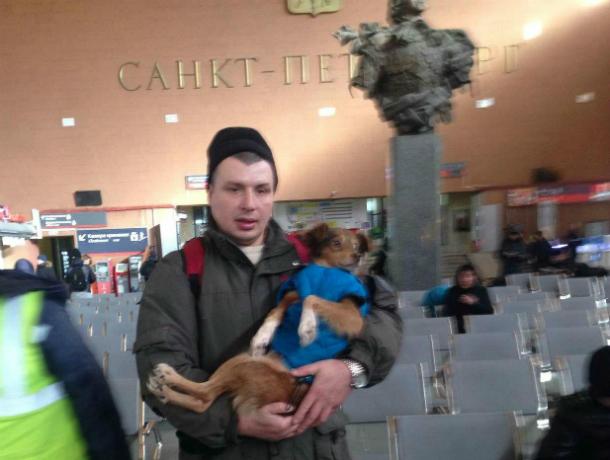 Песик Каштанчик,  на операцию которого жертвовали деньги читатели  Блокнота, из Таганрога прибыл в Санкт-Петербург