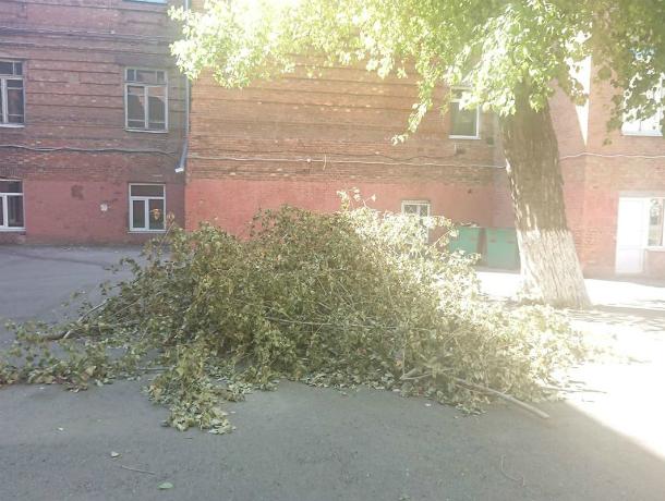 Горожанин возмутился, почему на территории школы в Таганроге валяются ветки