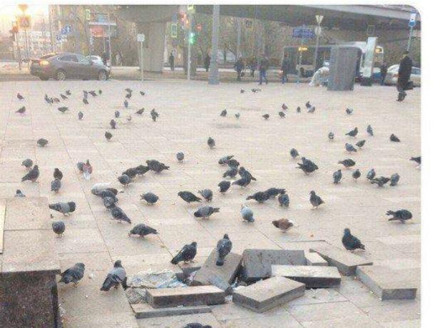 Горожане ищут виноватых в плохих дорогах и считают, что  это -  голуби