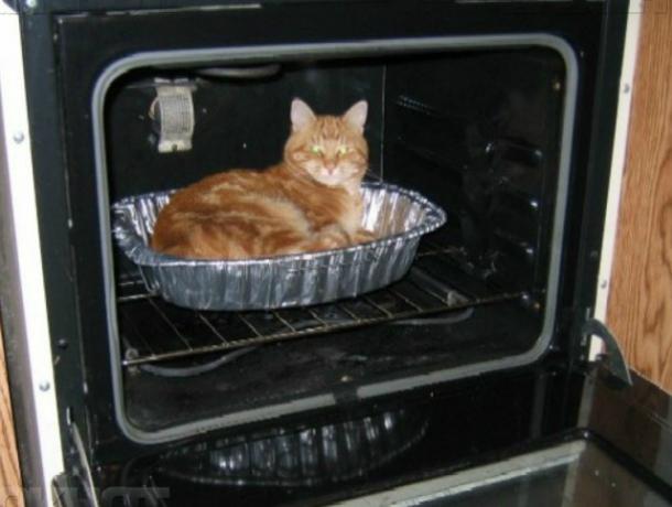 Дамочка забрала котят из Таганрога тоже, куда дела -  неизвестно